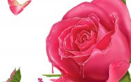 Pink Rose Wallpaper With Blue Daisy  18 Free Wallpaper