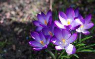 Purple Flower Wallpaper Background  2 Hd Wallpaper