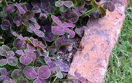 Purple Flower Wallpaper Border  19 Free Wallpaper