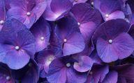 Purple Flower Wallpaper Desktop  1 Background