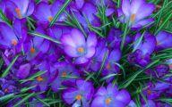 Purple Flower Wallpaper Desktop  11 Background