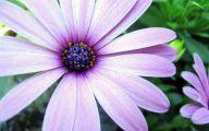 Purple Flower Wallpaper Desktop  15 Cool Wallpaper