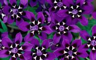 Purple Flower Wallpaper Desktop  5 Desktop Wallpaper