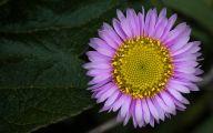 Purple Flower Wallpaper Desktop  6 Background