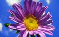 Purple Flower Wallpaper For Ipad Hd  19 Free Wallpaper