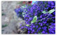 Purple Flower Wallpaper For Ipad Hd  8 Cool Wallpaper