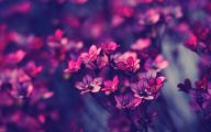 Purple Flower Wallpaper Images  2 Wide Wallpaper