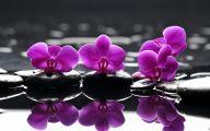 Purple Flower Wallpapers  51 Desktop Background