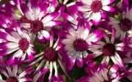 Purple Flower Wallpapers Hd  2 Free Wallpaper
