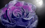 Purple Rose Wallpaper  75 Cool Wallpaper