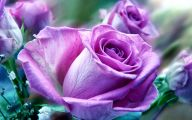 Purple Rose Wallpaper Border  9 Free Wallpaper
