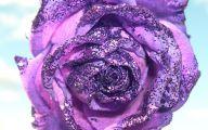 Purple Rose Wallpaper Desktop  22 Free Hd Wallpaper