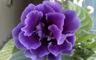 Purple Rose Wallpaper Desktop  26 Desktop Wallpaper