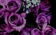 Purple Rose Wallpaper Desktop  9 Free Wallpaper