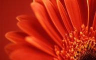 Red Flower Hd Wallpapers For Desktop  15 Background