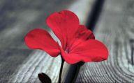 Red Flower Hd Wallpapers For Desktop  20 Desktop Wallpaper