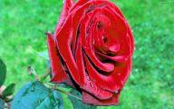 Red Flowers Wallpaper  3 Desktop Wallpaper