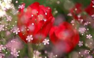 Red Rose Wallpaper Free Download  13 Background