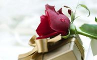 Red Rose Wallpaper Free Download  23 Background