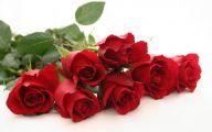 Red Rose Wallpaper Free Download  5 Background Wallpaper