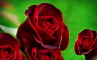 Red Rose Wallpaper Hd  7 Desktop Background
