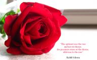 Red Roses Wallpaper For Desktop  3 Widescreen Wallpaper