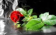 Red Roses Wallpaper For Desktop  6 Background Wallpaper