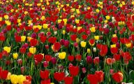 Red Roses Wallpapers For Iphone 5C  10 Cool Hd Wallpaper
