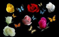 Red Roses Wallpapers For Iphone 5C  26 Desktop Wallpaper