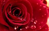 Red Roses Wallpapers Free  2 Hd Wallpaper