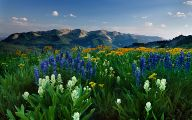 Rocky Mountain Flower Guide 3 Free Hd Wallpaper