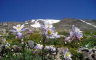 Rocky Mountain Flower Guide 31 Free Wallpaper