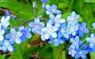 Rocky Mountain Flowers Identification 1 Free Hd Wallpaper