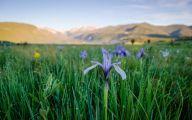 Rocky Mountain Flowers Identification 10 Cool Hd Wallpaper