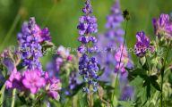 Rocky Mountain Flowers Identification 2 Desktop Wallpaper