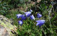 Rocky Mountain Flowers Identification 20 Desktop Background