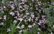 Rocky Mountain Flowers Identification 21 Desktop Background