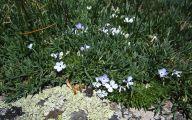Rocky Mountain Flowers Identification 24 Cool Wallpaper