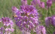 Rocky Mountain Flowers Identification 27 Background