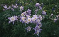 Rocky Mountain Flowers Identification 29 Hd Wallpaper
