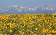 Rocky Mountain Flowers Identification 30 Wide Wallpaper