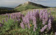 Rocky Mountain Flowers Identification 32 Hd Wallpaper