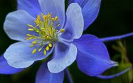 Rocky Mountain Flowers Identification 4 Hd Wallpaper