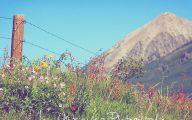 Rocky Mountain Flowers Identification 6 Widescreen Wallpaper