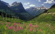Rocky Mountain National Park Wildflowers 1 Desktop Wallpaper