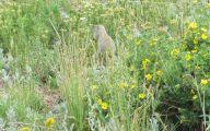 Rocky Mountain National Park Wildflowers 13 Widescreen Wallpaper
