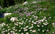 Rocky Mountain National Park Wildflowers 18 Cool Wallpaper
