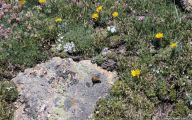 Rocky Mountain National Park Wildflowers 19 Widescreen Wallpaper