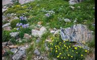 Rocky Mountain National Park Wildflowers 20 Desktop Wallpaper