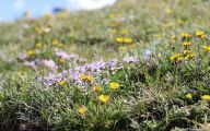 Rocky Mountain National Park Wildflowers 21 Free Wallpaper